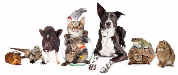 Country Vet Clinic - Animals We Treat