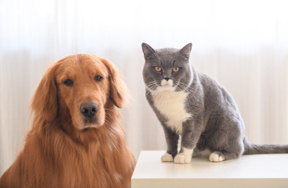 Dog and Cat standing still