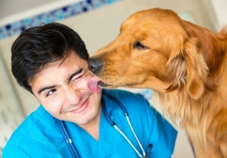 dog kissing a vet