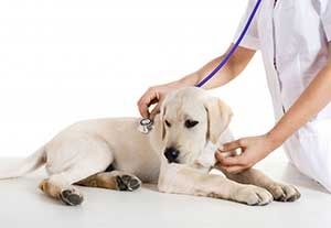 dog pet exam