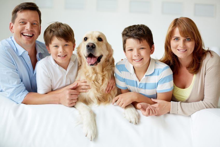 Capital Veterinary Specialists pets and kids