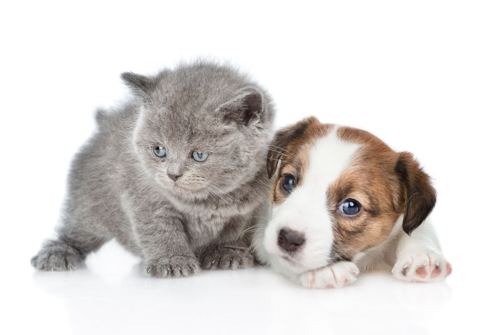 Benefits of Spaying and Neutering Pets
