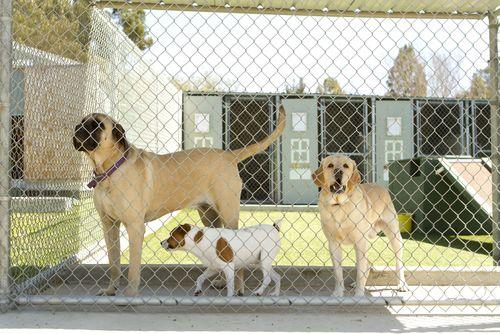 Port Charlotte FL Dogs in boarding