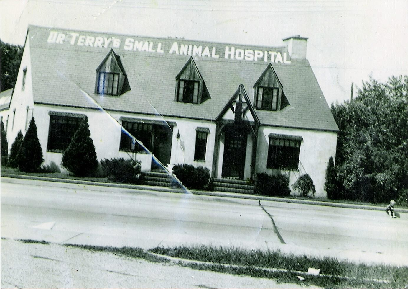 terry animal hospital
