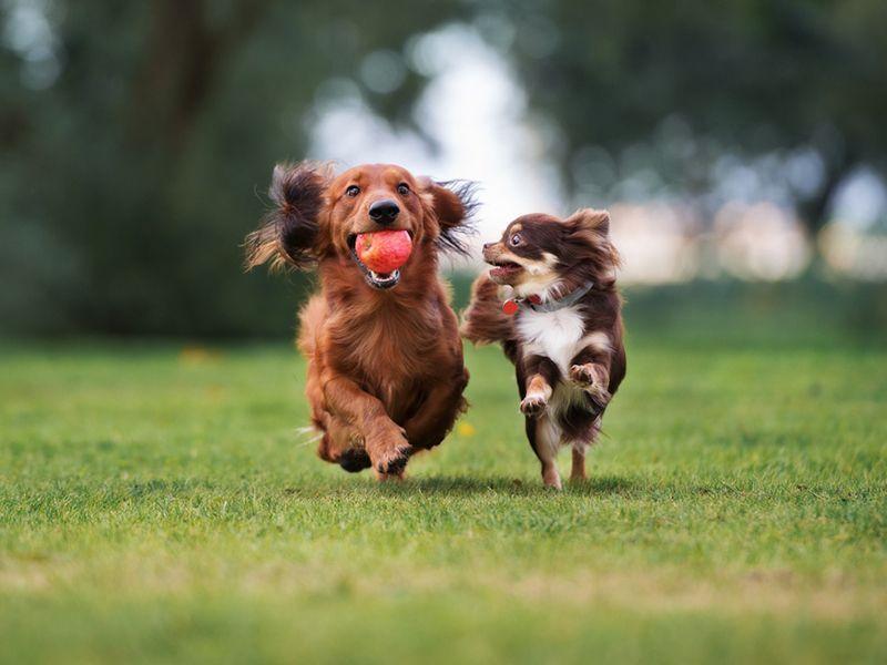 Pensacola Pet Allergies and Dermatology