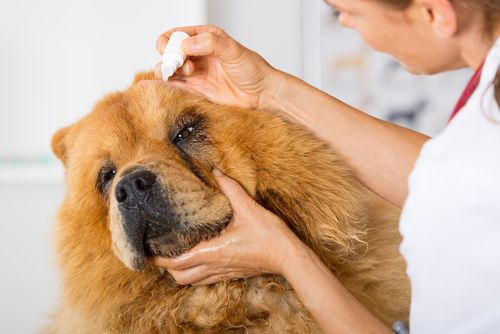 Safe Harbor Animal Hospital Pet Surgery