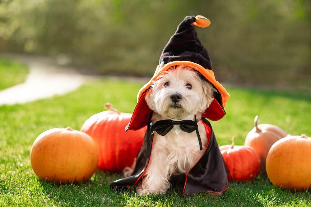 Ten Fall Pet Safety Tips