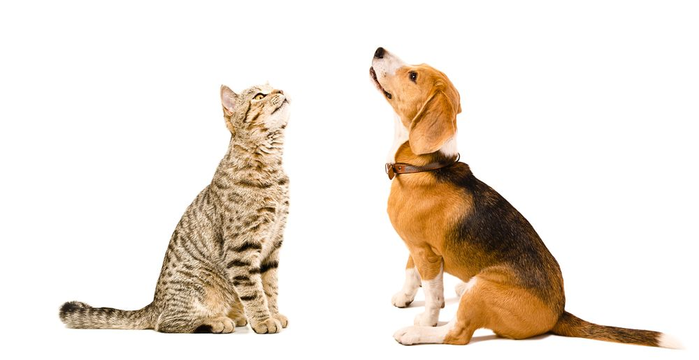 Why Should I Spay or Neuter My Pet?