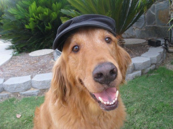 smiling dog with a cap