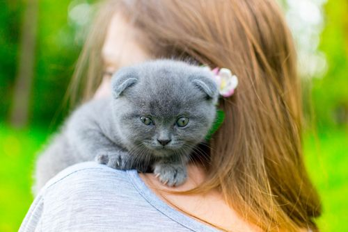 kitten on the lady's shoulder