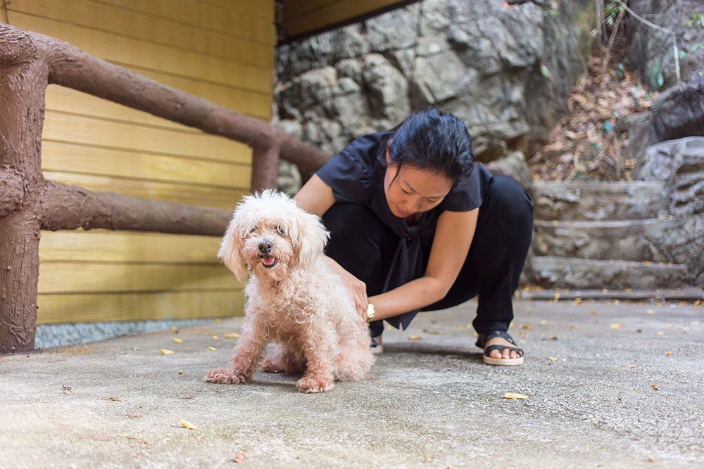 vet checking dog