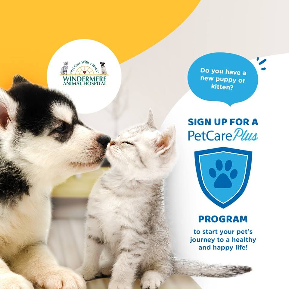 PetCare plus
