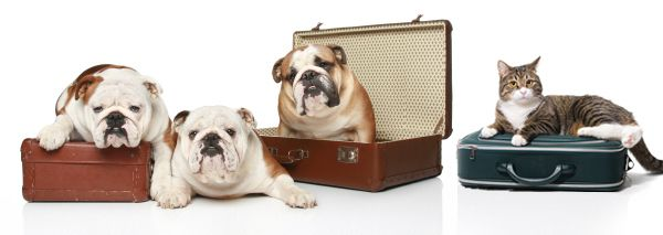 Pets ready for travel in Nashville