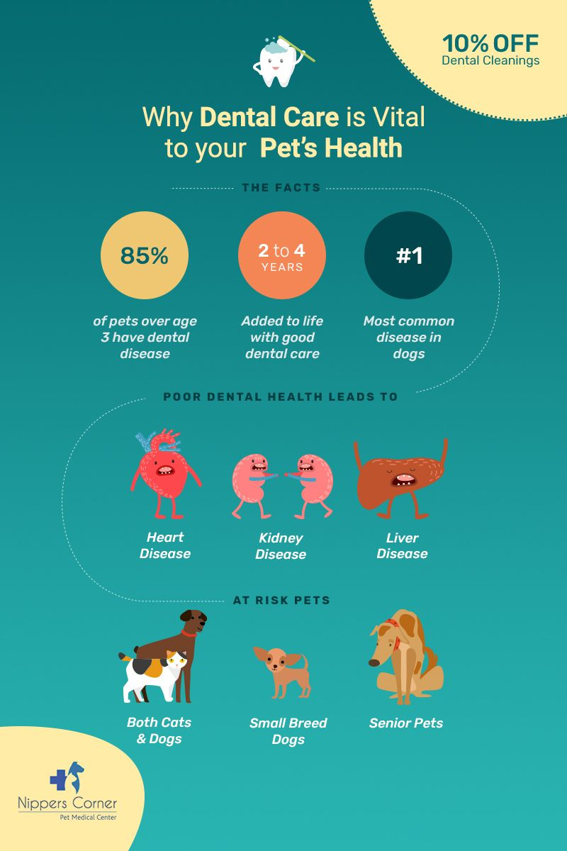Save on Pet Dental Cleanings
