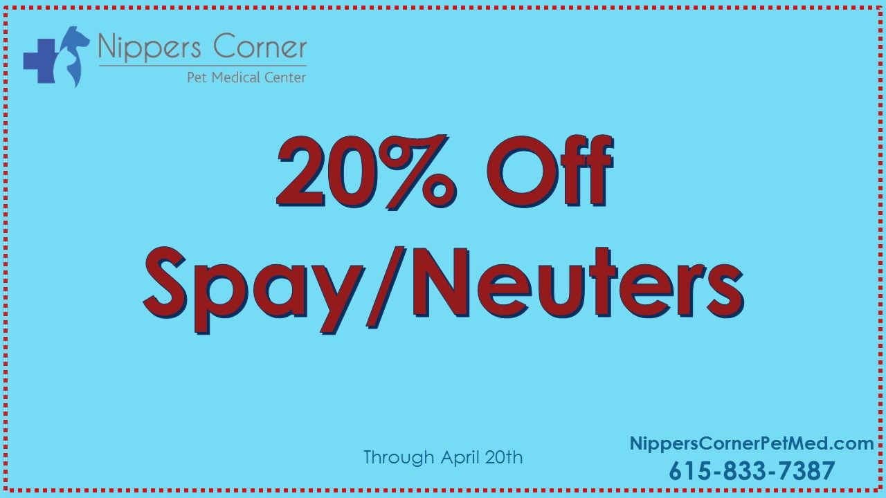 Discount Spay/Neuter Surgeries