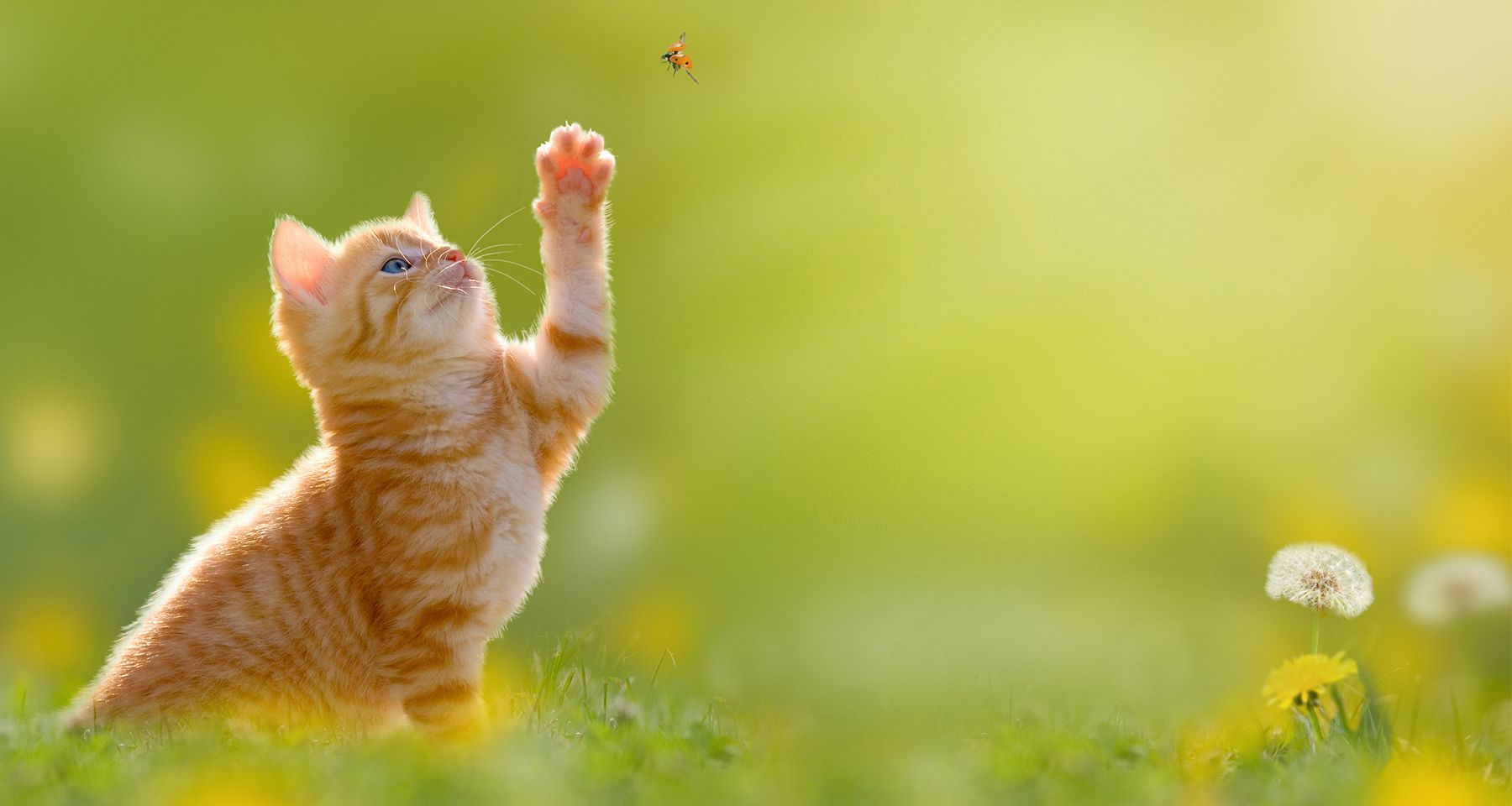 kitten catching a bug in Nashville TN