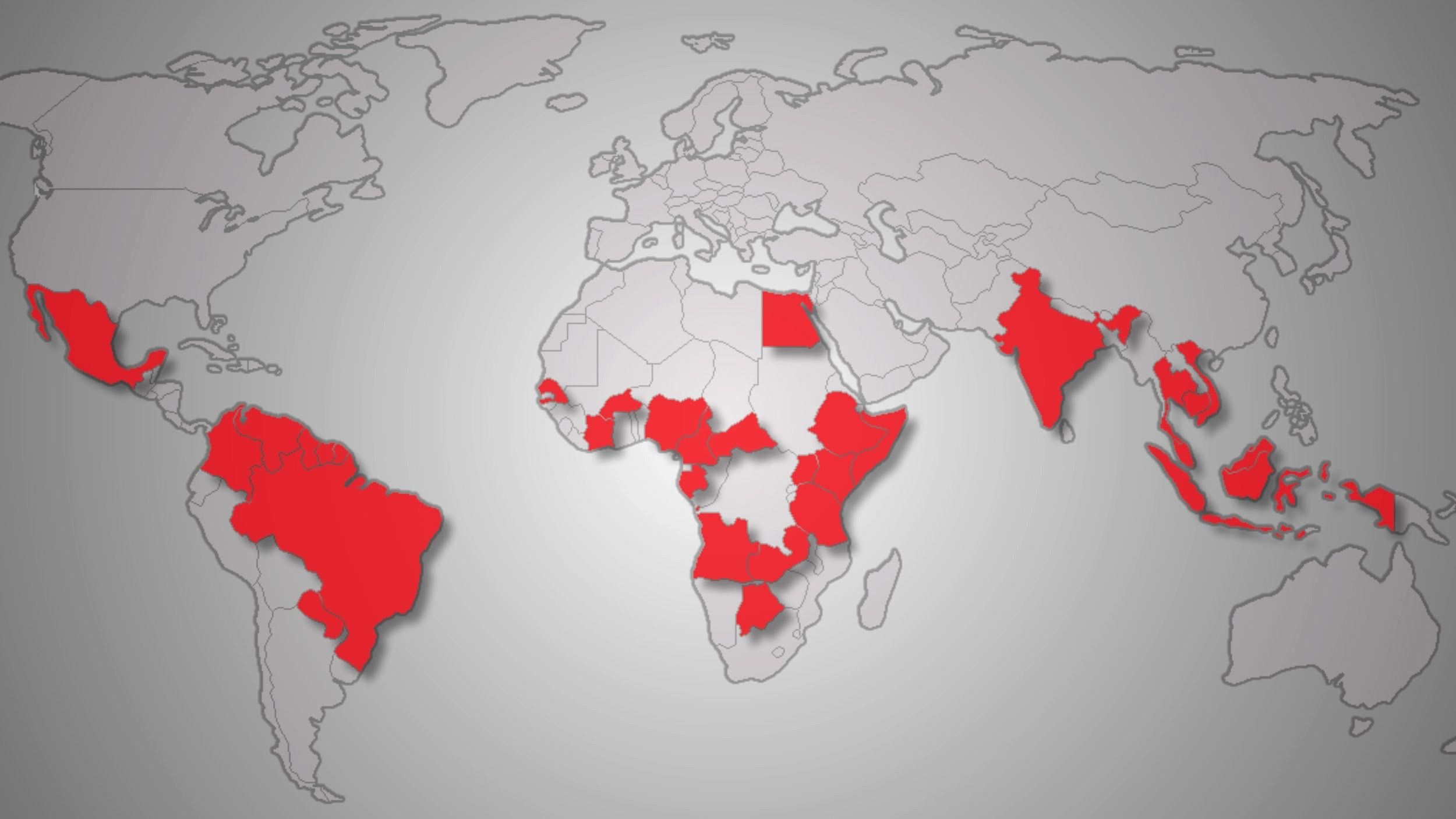 dengue world map