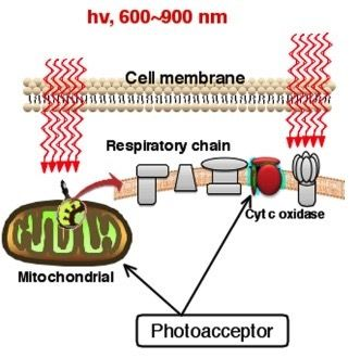 cell membrane map