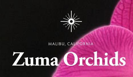 Zuma Orchids