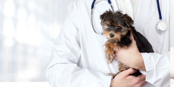 Hoover Veterinary Services
