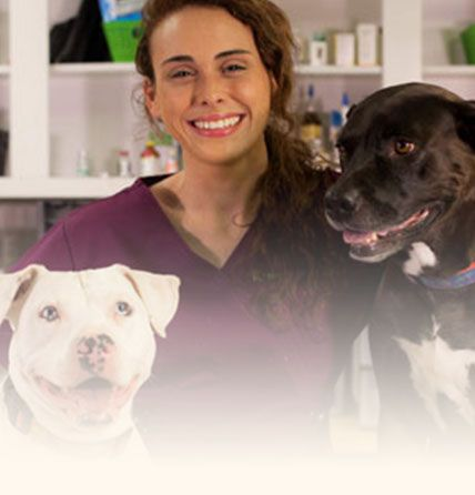 Patton Chapel Animal Clinic Online Store