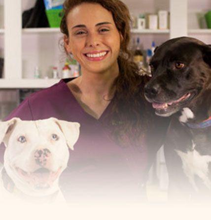 Patton Chapel Animal Clinic Online Store
