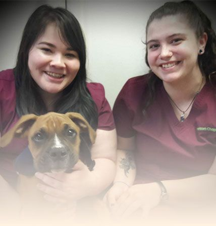 Patton Chapel Animal Clinic Services