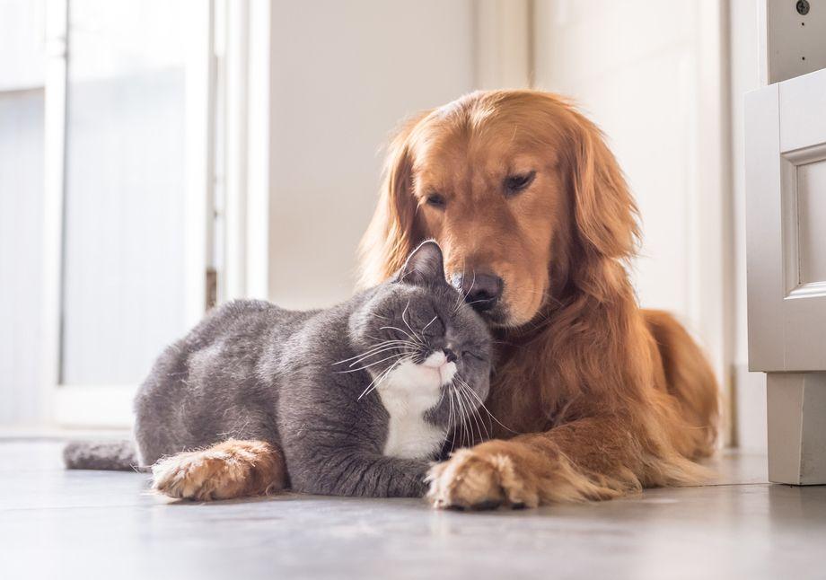 Canine Feline Service