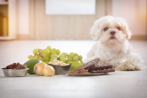 Poison Guide: What to do if you think your pet has been poisoned