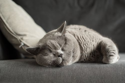 Why cats like to relax and sleep up high