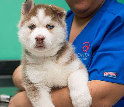 Puppy, Kitten and Senior Pet Care in Birmingham AL