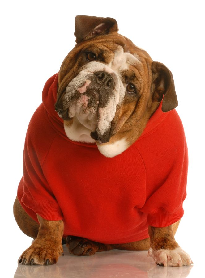 dog in human clothes