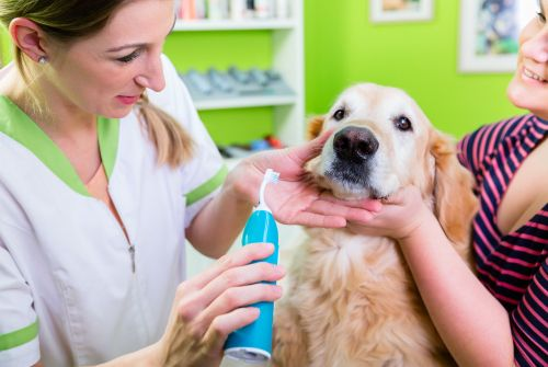 What Causes Bad Breath in Pets – Pet Oral Health 101