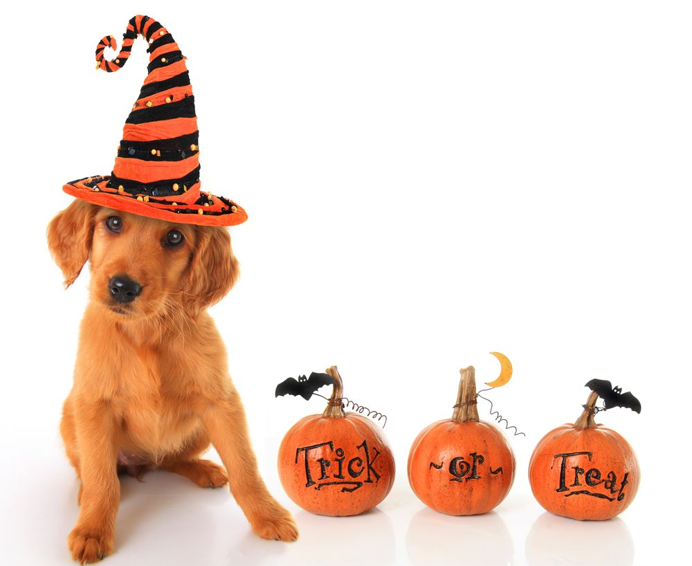Top Dangerous Foods for Pets at Halloween