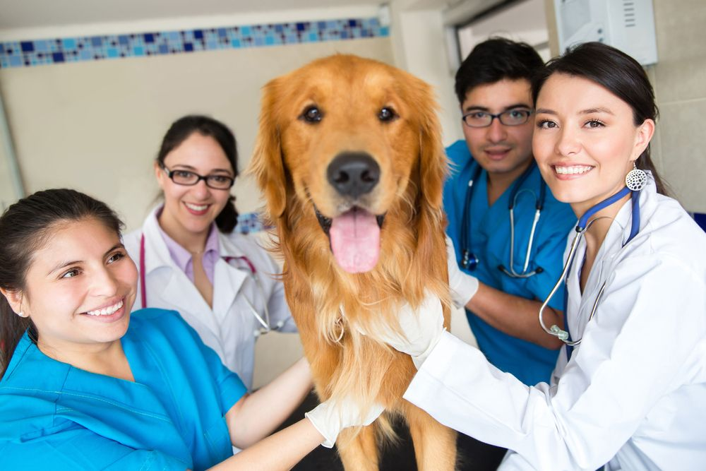 Veterinary Team with Dog