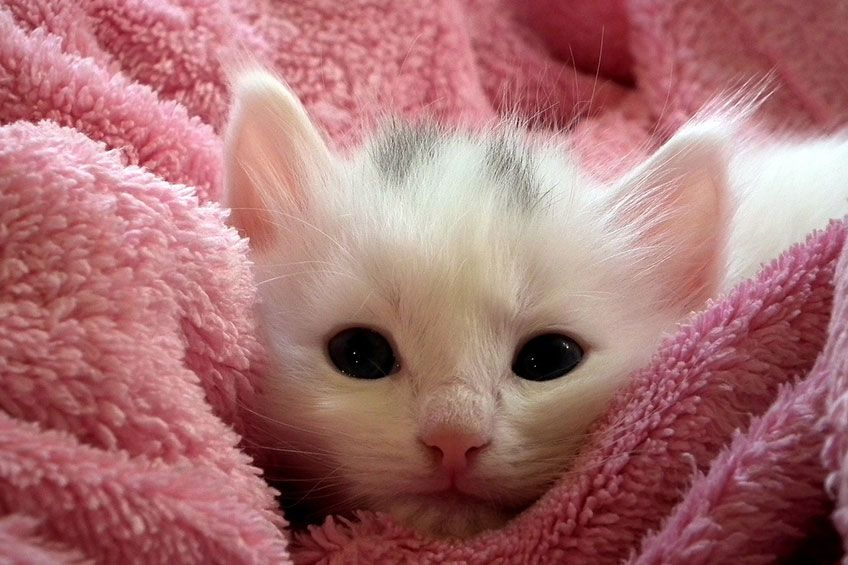 New born kitty!