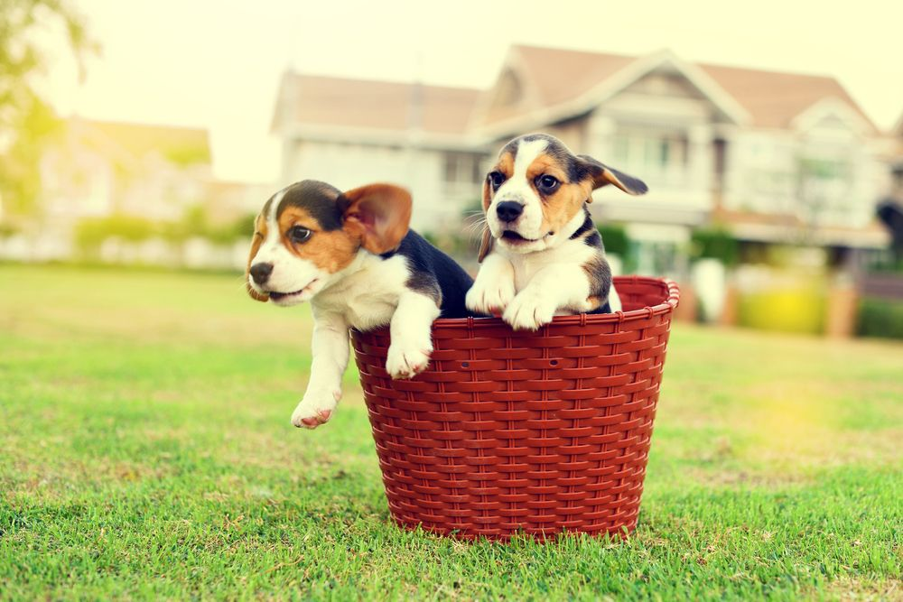 two dogs in a basket