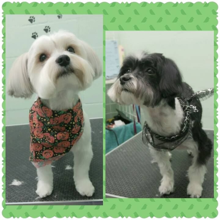 Best Pet Groomer in Gainesville