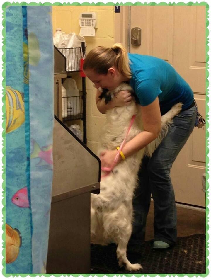 vet grooming a dog