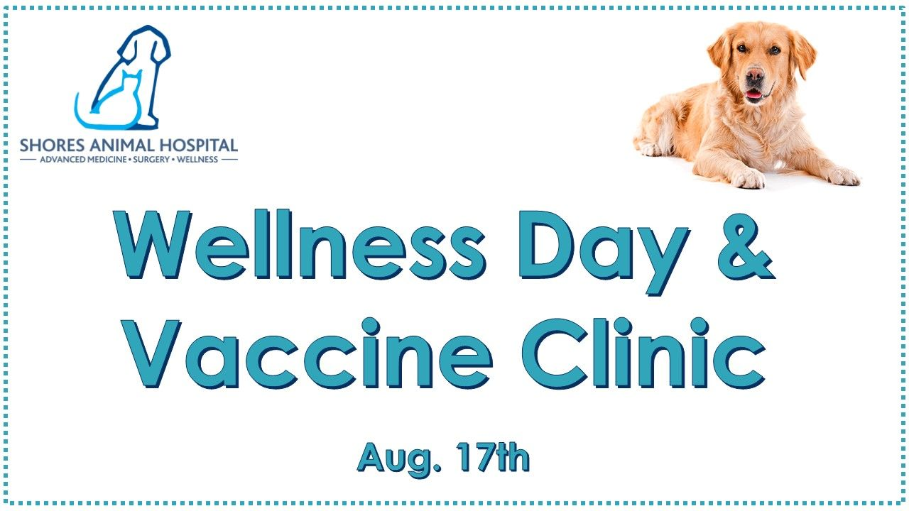 Dog Wellness Day & Vaccine Clinic on August 17th