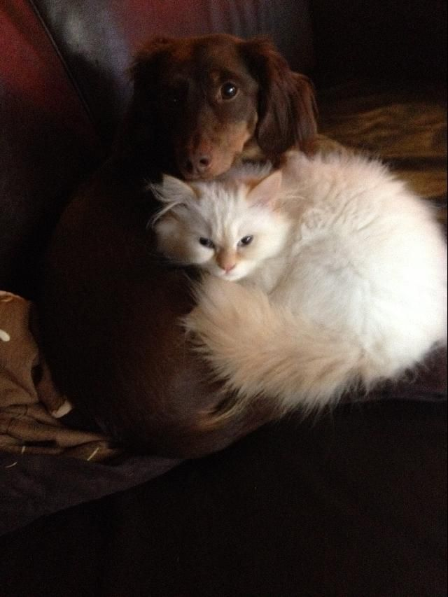 abby and leo