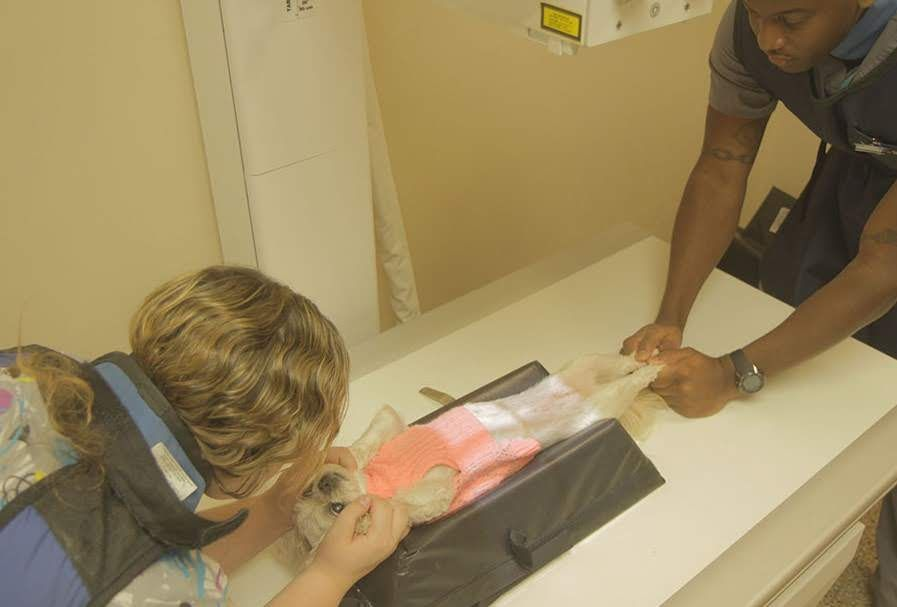 vet pointing at the x-ray