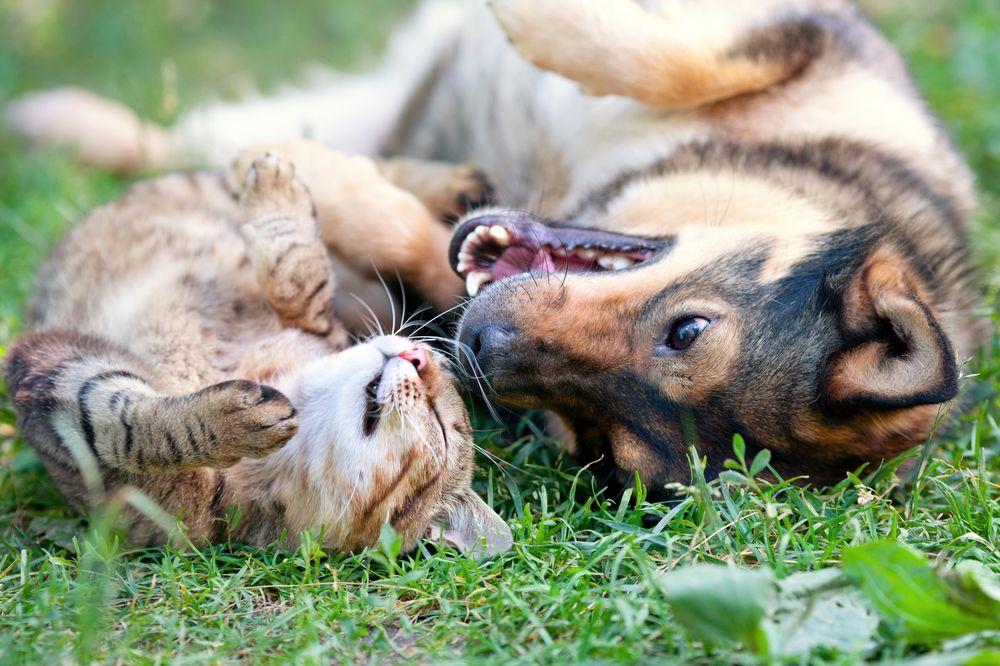 Alachua County Pet License Tags