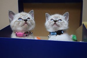 Double trouble await their first visit to Southeast Alaska Animal Medical Center.