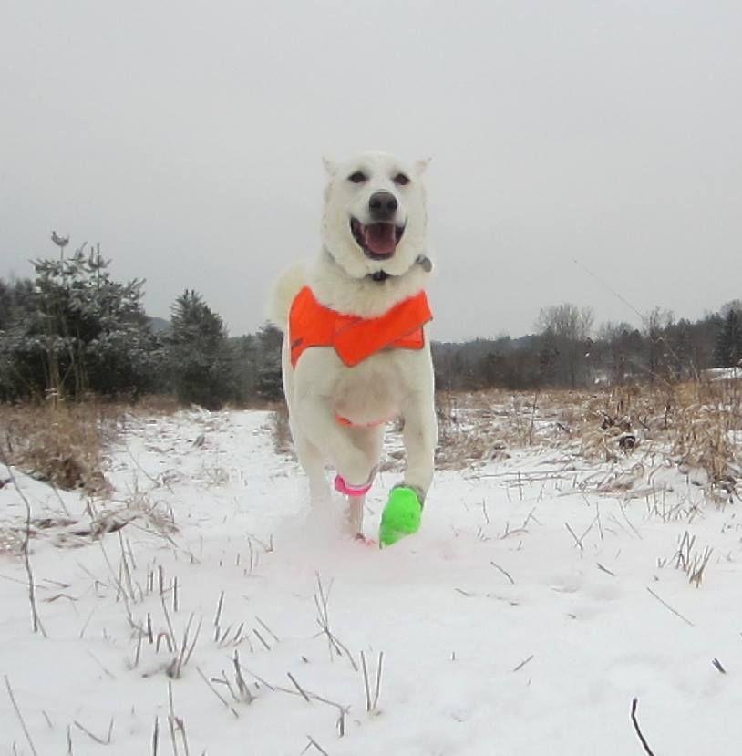 Blog | Long Trail Veterinary Center
