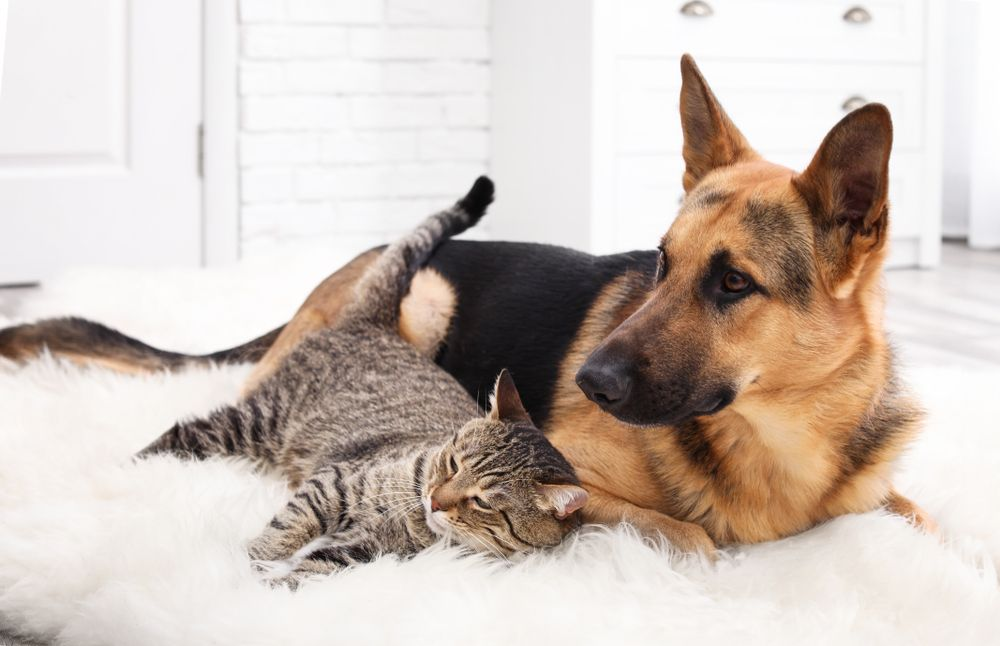 What is Veterinary Acupuncture?