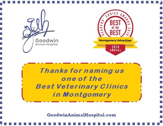 One of the Best Veterinary Clinics in Montgomery