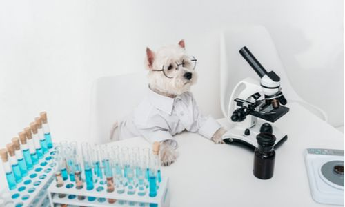 dog in laboratory