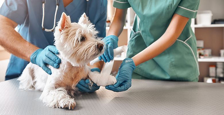 Pet checkup