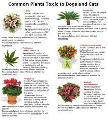 common plants toxic to pets